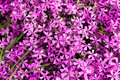 Free Violet Flowers For Decoration Stock Image - 16989521