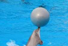 Bottlenose Dolphin Stock Photography