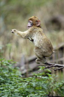 Free Monkey Baby Stock Image - 16986711