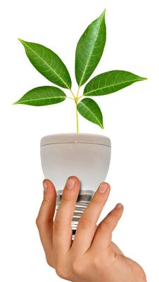 Free Tree Seedling In Lamp Stock Image - 16987091