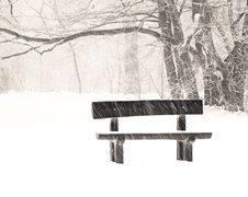 Free Nice Park In Winter Stock Image - 16988971