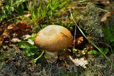 Free Mushroom Stock Photos - 16989223