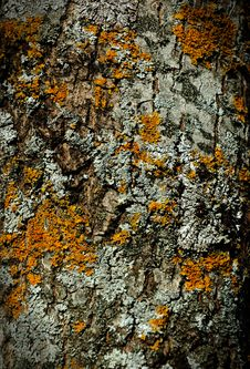 Free Moss Bark Wooden Texture Royalty Free Stock Photos - 16989348