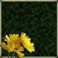 Free Yellow Daisies Border On Green Stock Photos - 16998713