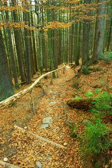Free Autumn Stock Photo - 16991120
