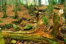 Free Autumn Stock Photography - 16991132