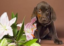 Free Puppy With White Lily Stock Photography - 16991292