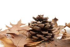 Free Pine Cones Stock Image - 16991531