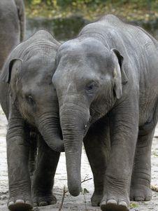 Free Two Baby Elephants Stock Image - 16992151