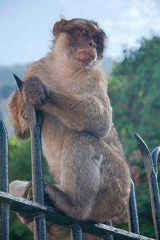 Free Monkey On A Railing Stock Image - 16994151