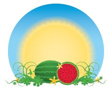 Free Watermelon Patch Royalty Free Stock Photography - 16997427