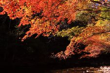 Free Autumn Maple Royalty Free Stock Photos - 16997748