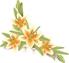 Free Lily Flowers Stock Photography - 16998012
