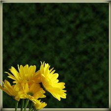 Yellow Daisies Border On Green Stock Photos