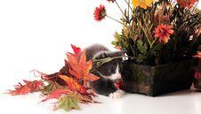 Free Kitty Play Stock Photos - 16999483