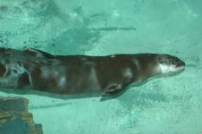 Free River Otter Stock Photography - 170052