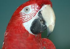 Free Macaw Stock Photos - 170053