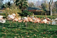 Free Bird Group Royalty Free Stock Photos - 170278