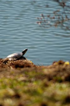 Free Painted Turtle Stock Photos - 171293
