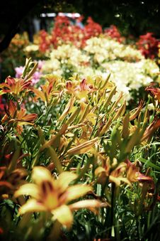 Free Blanket Of Flowers Stock Photography - 172682
