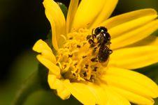 Free Bee Royalty Free Stock Photos - 173958