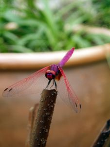 Free Photo Of Dragonfly Royalty Free Stock Photo - 175135