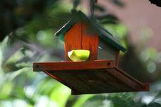 Free Bird Feeder Stock Photos - 175473