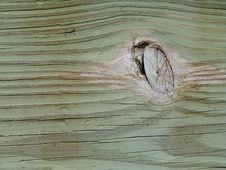 Free Beige Knot In Green Wood Stock Images - 176614