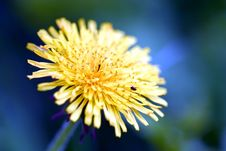 Free Yellow Flower Royalty Free Stock Photography - 177087