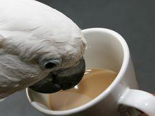 Free Parrot Stock Photo - 177200