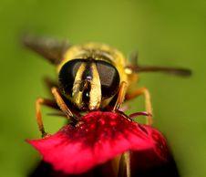 Free Wasp...(13) Royalty Free Stock Photos - 177408