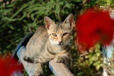 Free Cat Royalty Free Stock Image - 178126