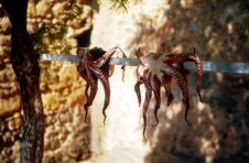 Free Octopus Royalty Free Stock Photos - 178518