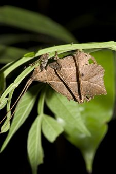 Dry Leaf Stock Photography