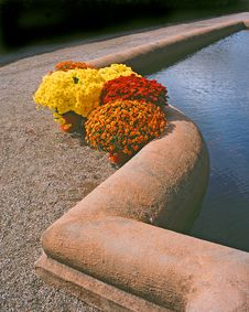 Free Flowers Along The Pond Royalty Free Stock Photos - 179248