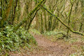 Free Woodland Walk Stock Photos - 1700133