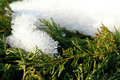 Free Snow Covered Plant 2 Royalty Free Stock Photography - 1707347