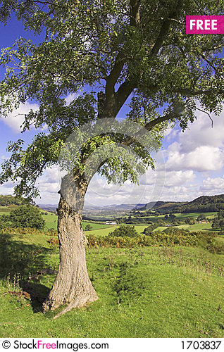 Free Tree On A Hill Royalty Free Stock Photography - 1703837