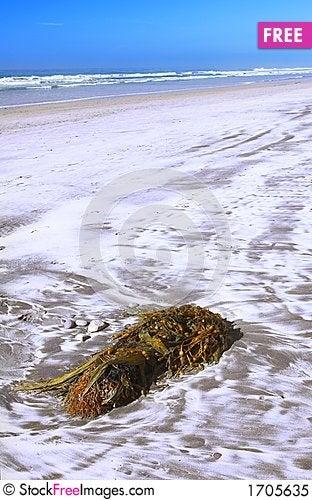 Beach plant Stock Photo