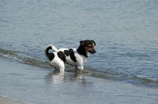 Free Water Dog Royalty Free Stock Images - 1700139