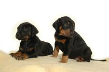Two Sweet Puppies Stock Photo