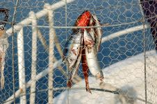 Free Fishing Series - Fish Trap/coop Stock Images - 1700424