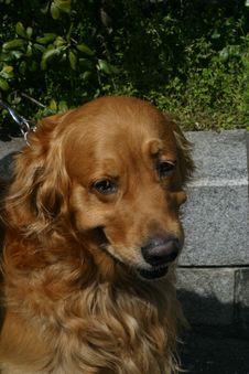 Free Dog02 Stock Image - 1702511