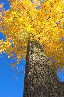 Free Autumn Leaves Against Blue Sky Stock Photos - 1703673