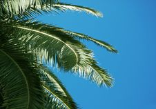 Free Branch Of Palm Tree And Blue Sky Stock Photos - 1704043