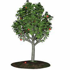 Free Tree Of Love 1 Stock Photo - 1704600