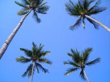 Free Coconut Tree Frame/Border Stock Photos - 1705043