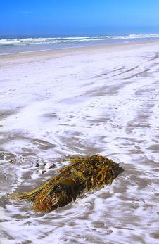Free Beach Plant Royalty Free Stock Photo - 1705635