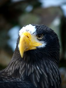 Free EAGLE Stock Image - 1707241