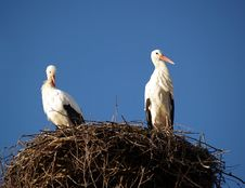 Free STORK NEST Royalty Free Stock Photography - 1707297